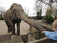 Der Kongress gebiert eine Maus - und die wird uns als Elefant verkauft.
